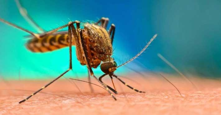 Εκατομμύρια γενετικά τροποποιημένα κουνούπια πρόκειται να απελευθερωθούν